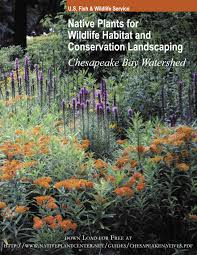 free native plants links to helpful resources little falls watershed alliance