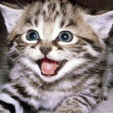 funny cats videos catsvideosdaily twitter