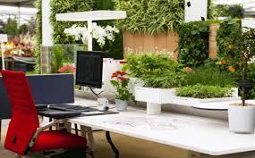 plantes bureau plantes dans le bureau