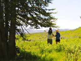 yellowstone vacation packages 5 day adventure