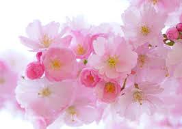 Cute Flower Wallpapers - beautiful rose flower wallpaper free download cool hd wallpapers