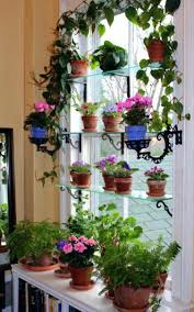 no sun plants indoor flowering plants no sunlight make no mistake violets need