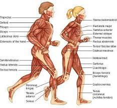 Female Anatomy Organs Human Anatomy Organs Female Periodic Tables