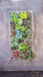 141 best succulent design living vertical wall portfolio images on
