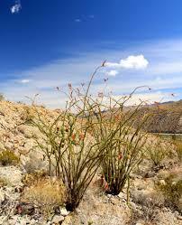 spring in anza borrego desert onblueundercanvas