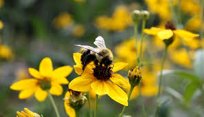 Flowers Bees Pollinate - the best flowers for a vegetable garden hobby farms