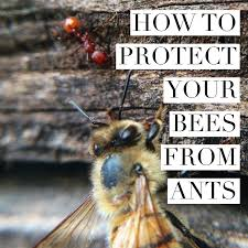 beekeeping like a how to protect your bees from ants