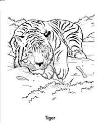 coloring pages of tigers realistic and detailed coloring page of tiger for older kids