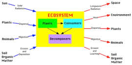 what are the levels of organisation in the biosphere mireille