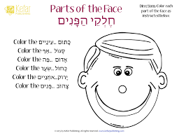 parts of the face worksheet the best and most comprehensive