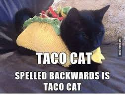 Cats Memes - 25 best memes about taco cats taco cats memes