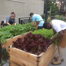vegetable garden sun requirements custom vegetable garden u2013 urban seedling