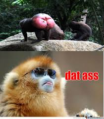 Funny Monkey Meme - dat monkey by kamen2000 meme center