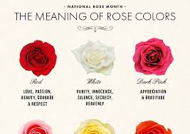 roses colors best 25 color meanings ideas on roses