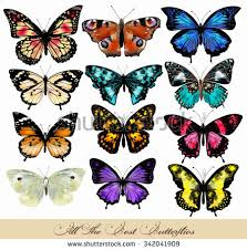 vintage butterfly patterns free vector stock