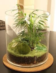 27 best terrarium plants images on pinterest terrarium plants