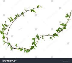 border frame made green climbing plant stock photo 149083916