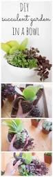 Low Bowl Planters by Best 25 Succulent Bowls Ideas On Pinterest Suculent Plants
