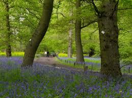 royal botanic gardens kew art fund