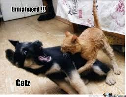 Scared Cat Meme - scared from a cat by serkopat meme center