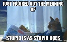 Stupid Cat Meme - just figured out the meaning of stupid is as stupid does