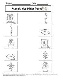 what do plants make worksheet worksheets for kindergarten plant