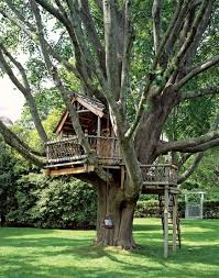 winning cool treehouses interior of software decorating ideas
