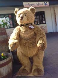 bears delivery this handsome boy caretaker arrived in yesterday s bears
