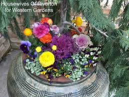 8 tips planting early spring flower pots western garden centers