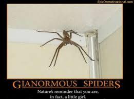 Damn Nature You Scary Meme - damn nature you scary meme by davidgalvan123 memedroid