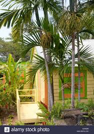 brightly colored small wooden house and palm trees on tropical