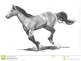pencil drawing of running horse stock images image 12109504