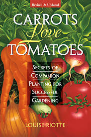 Gardening Picture Carrots Love Tomatoes Secrets Of Companion Planting For