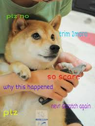 Memes Doge - no trimming plz doge know your meme