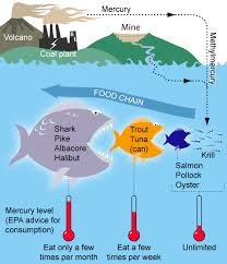 Urban Myth Kitchen - the smart seafood buying guide nrdc