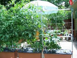 Urban Veggie Garden - inside urban green small yard vegetable garden