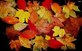 fall pumpkin wallpaper hd autumn leaf wallpaper wallpapers browse