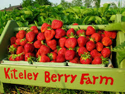 kiteley u0027s farm market charlevoix michigan you pick farm