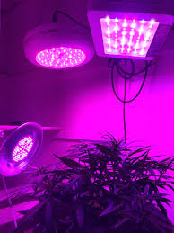 No Light Plants Topping Plants Thru Light Manipulation No Cutting Indoor