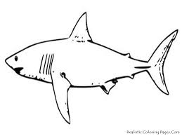 realistic sea animal coloring pages shark