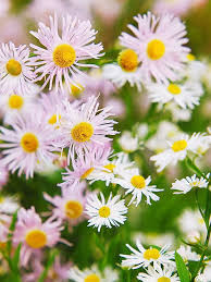 164 best flowers and plants images on pinterest flower