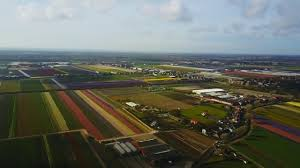 a flight over the netherlands tulip fields youtube