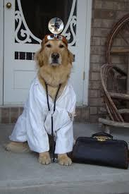 funny dog costumes halloween 424 best animal halloween costumes images on pinterest animals