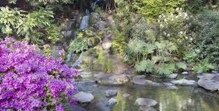 beautiful azaleas and rhododendrons for rock gardens