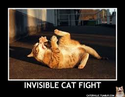Invisible Cat Memes - invisible cat memes 2018 funny cats