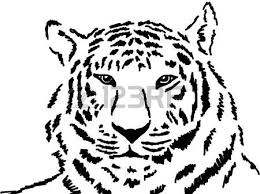 sketch of wild tiger in black and white stock photo picture and
