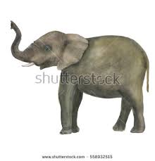 elephant painting stock images royalty free images u0026 vectors