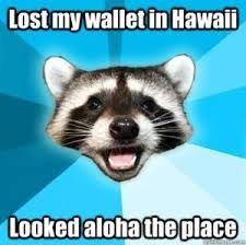 Hawaii Memes - 13 best meme images on pinterest meme memes humor and entertaining