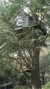 46 best treehouse images on pinterest treehouses amazing tree