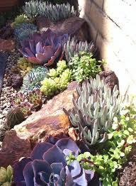 Succulent And Cacti Pictures Gallery Garden Design 14 Best Images About Atrium Garden On Pinterest Succulents